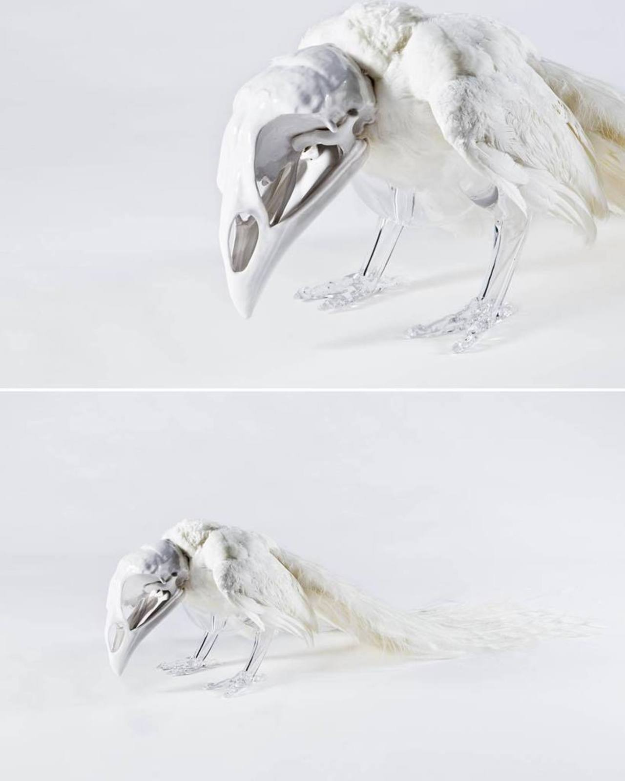 White #peacock #art #artificialCrossbreeding #glass #ceramics #taxidermy http://ift.tt/1Ks5iuW http://t.co/60zTGBYglz
