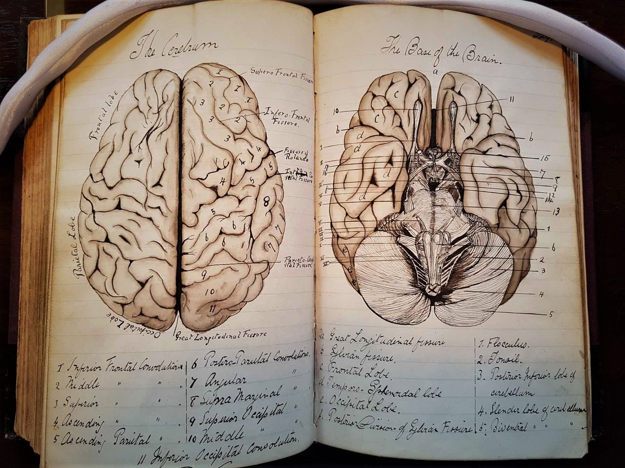 Fab anatomical illustrations of the brain by an artistic #Victorian ...